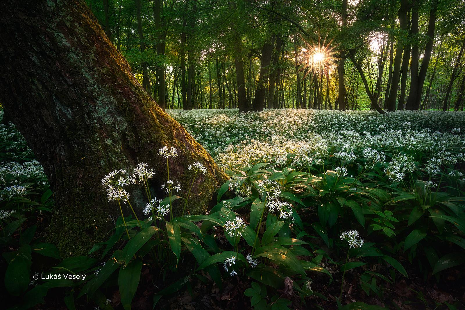 czech nature photo nominace český les – lukáš veselý