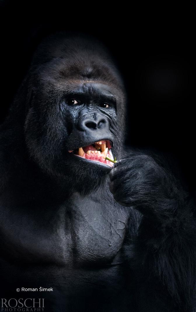 czech nature photo nominace zvířata v lidské péči – roman šimek
